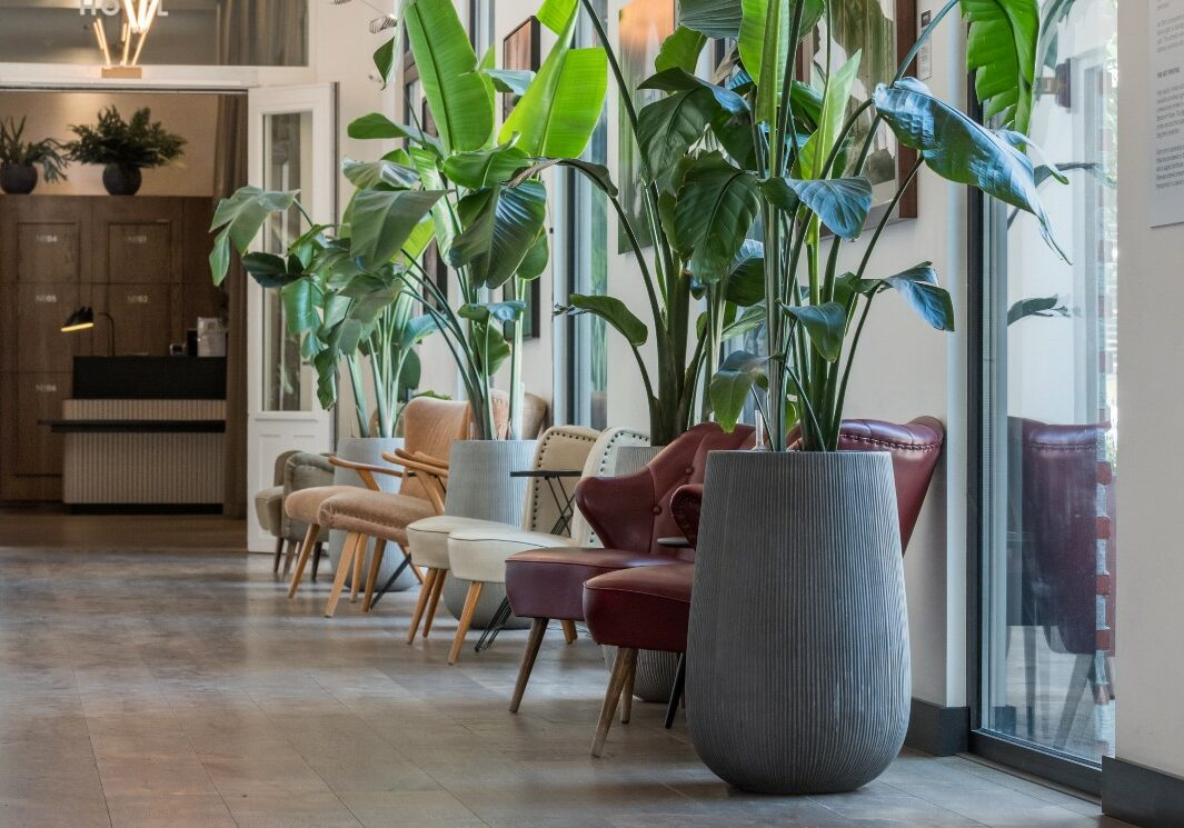 Planter skaper levende rom 1286-884